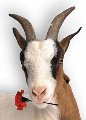 Resultado de imagen de dos cabras comiendo rollos de pelicula