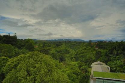 Pemandangan hutan dari hotel