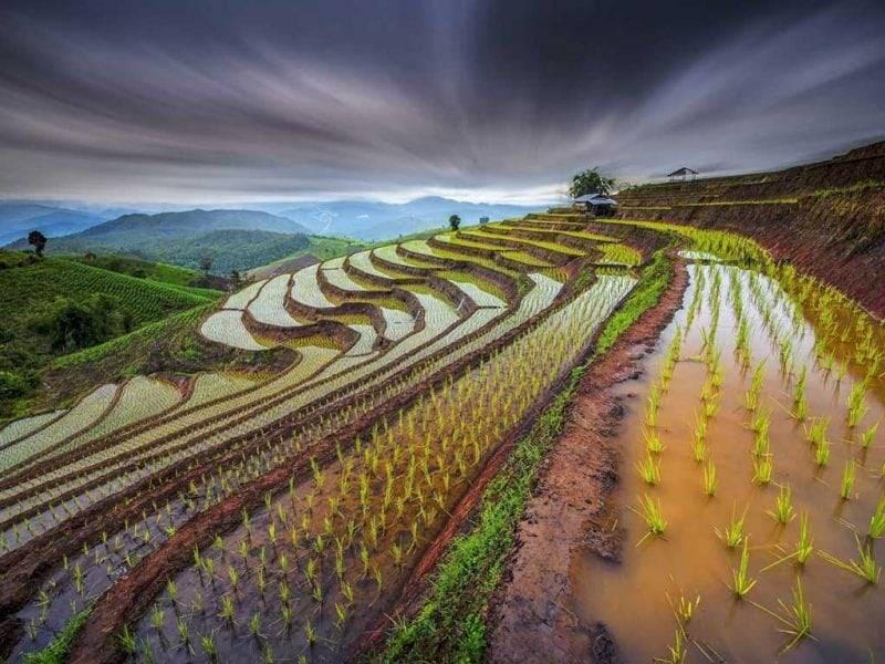 Рис. Распространённые продукты из риса. Japan