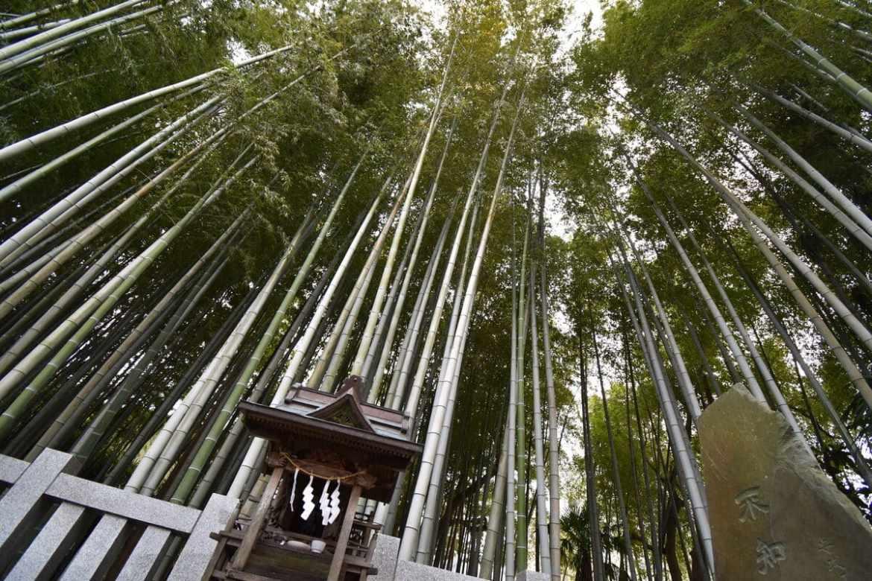 Явата-но-Ябуширазу, запретный лес Японии.