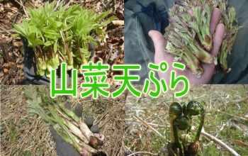 Сансаи, растения, япония