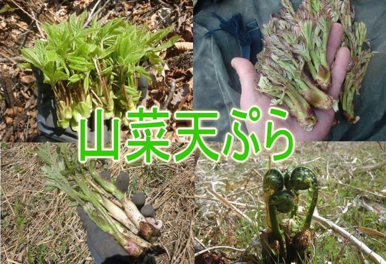 Давайте попробуем съедобную дикую флору Японии