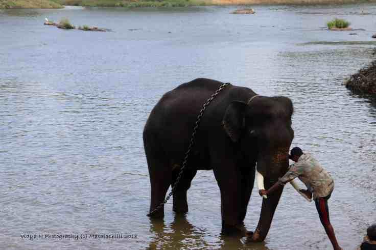Dubare Elephant Camp 1