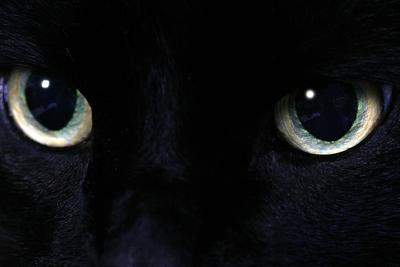 bigstock-cat-eyes-810196
