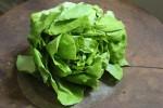 lettucechitra4