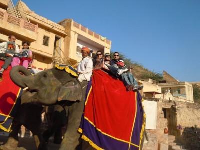jaipur elephant