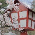 私が一番好きな花魁漫画「瀬戸内の女郎小屋~声なきものの唄」