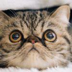 猫アレルギーの症状で喉がかゆい!!治療方法や市販薬を紹介!!