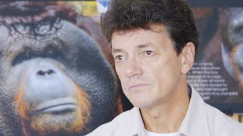 willie-being-interviewed-for-the-documentary-about-asias-great-ape-the-orangutan-and-why-this-critically-endangered-thinker-of-the-jungle-needs-our-help