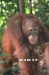Mamat FT5