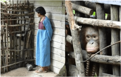 Left: Molly in her previous cage with the woman who kept her for about 2 years.  Right: Molly looking through the wooden bars. They used motorbike chains and nails to keep the bars together.
