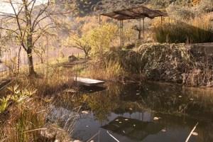 La piscina biològica a Mas Ardèvol