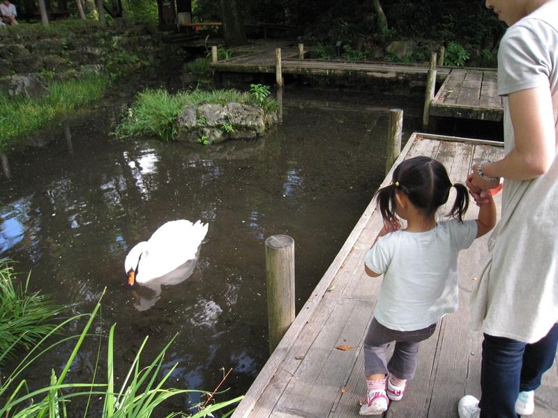 池で泳ぐシラサギと橋を歩く人