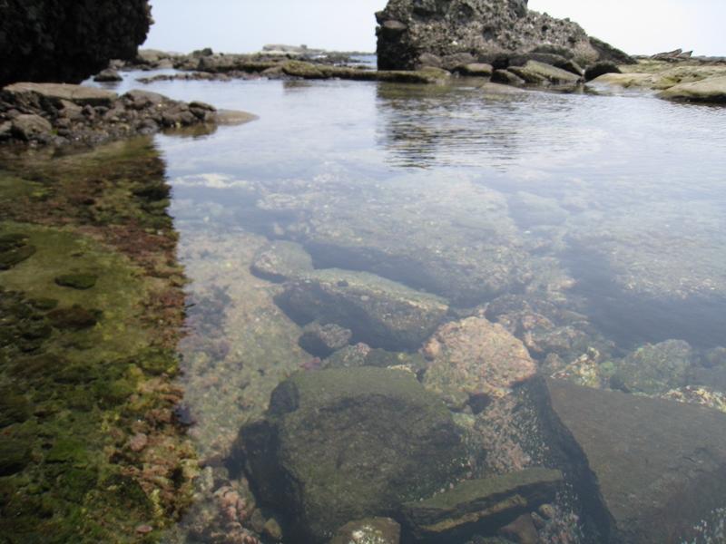 水の中に岩がたくさん転がっている