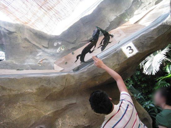 熱川バナナワニ園のガラス張りの天井にワニが二匹いる