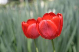 10 Warna Paling Mempengaruhi Marketing - Warna-Merah-pada-Web-Desain-dan-Grafis-10-warna-yang-mempengaruhi-sales-dan-marketing