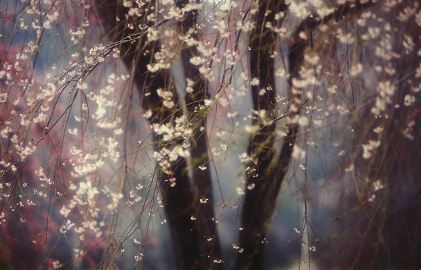Foto Terbaik Pemenang National Geographic - 04-National-Geographic-Photo-Contest-2013-Sakura