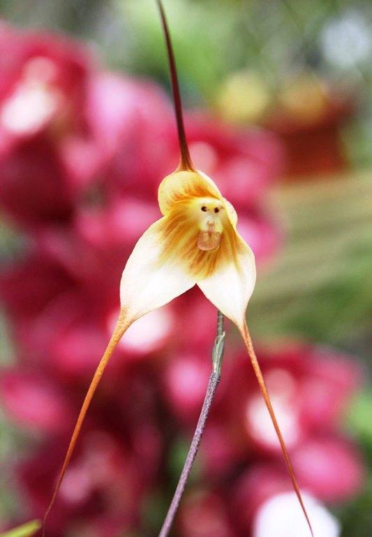 Bunga Mirip Seperti Bentuk Hewan