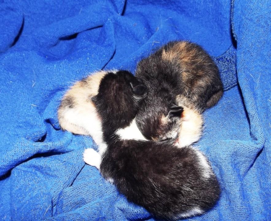 new born kittens - DSCF2826
