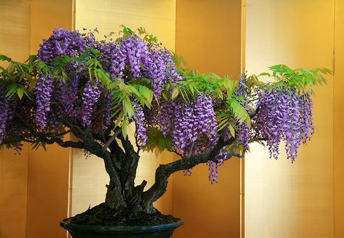 bunga ungu daung hijau
