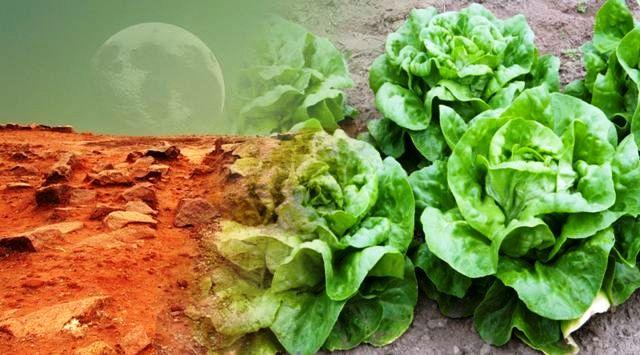 NASA Membuat Kebun Khusus untuk Penelitian Bertani di Planet Mars