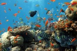 Berbagai jenis ikan hias air tawar dalam akuarium