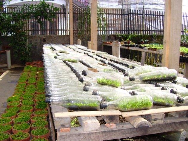 penggandaan bibit tanaman budidaya bunga anggrek