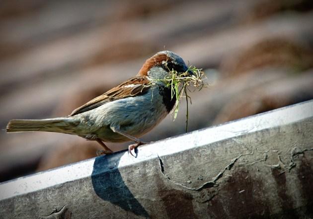 Contoh Hewan Omnivora dan gambar dan keterangannya Burung
