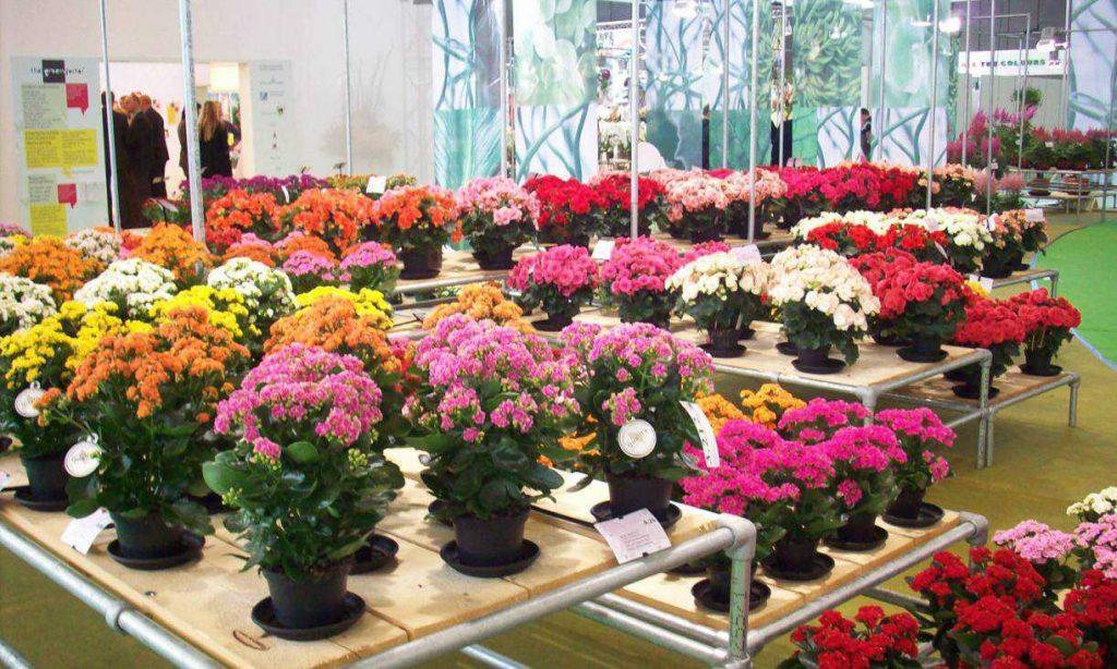aneka jenis tanaman indoor