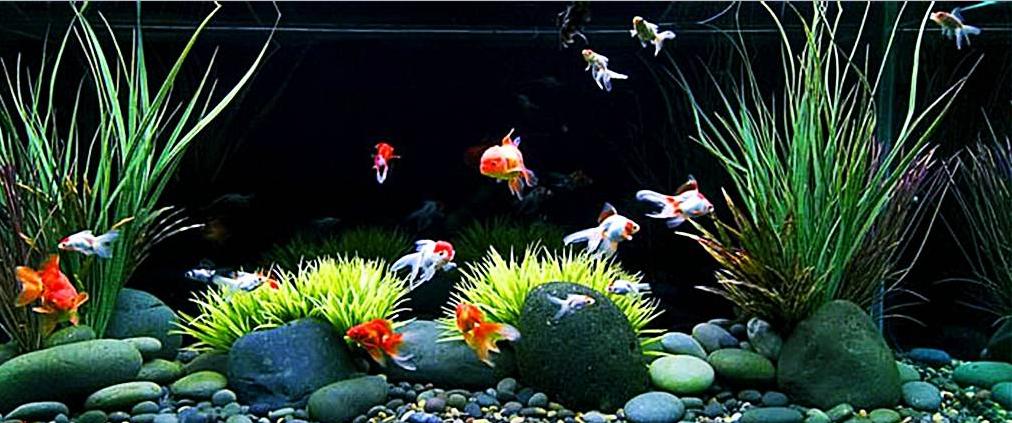 7 Jenis Ikan Hias Aquascape Air Tawar Termahal yang Mudah Dipelihara