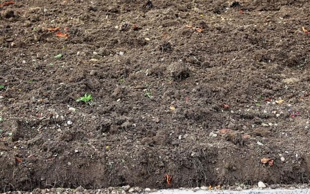 penjelasan jenis tanah humus di Indonesia
