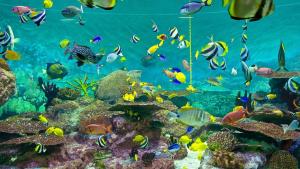 Jenis Ikan Hias Air Tawar Untuk Aquascape