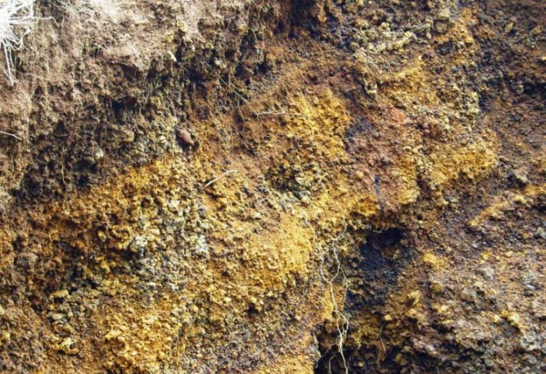 jenis tanah andosol yang ada di indonesia