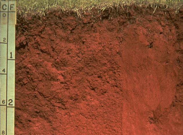 jenis tanah entisol di indonesia dan persebarannya