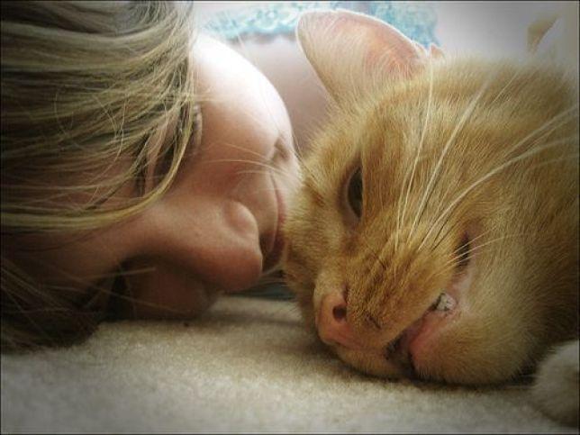 recompensar a tu gato