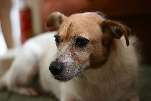 ¿Por qué un perro mestizo es tan especial?