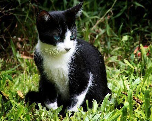 Segundo mes del gatito