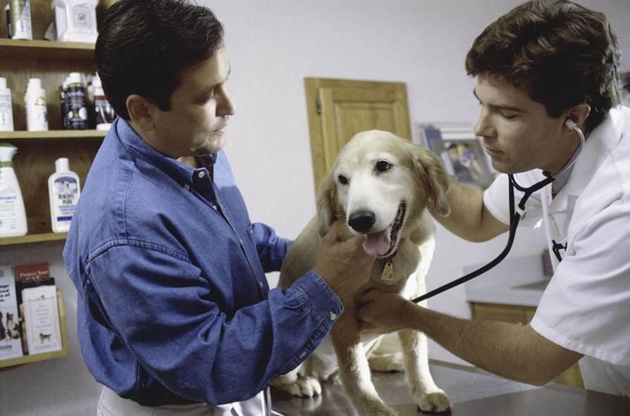 Diarrea por reacción a antibióticos en perros