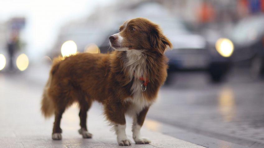 Cómo reducir el miedo al ruido de tu mascota