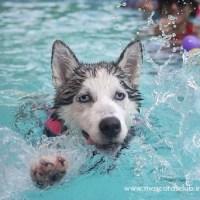 6 pasos para enseñar a tu perro a nadar