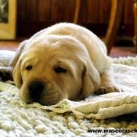 10 Tips para Calmar a un Perro o Gato asustado por los fuegos artificiales