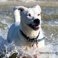 Playas y embalses para ir con nuestro perro