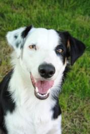Descubre los signos de alarma de ansiedad en animales - HeelVet