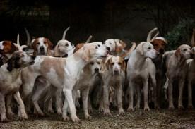 ¿Cómo se transmite la tos de las perreras? - HeelVet