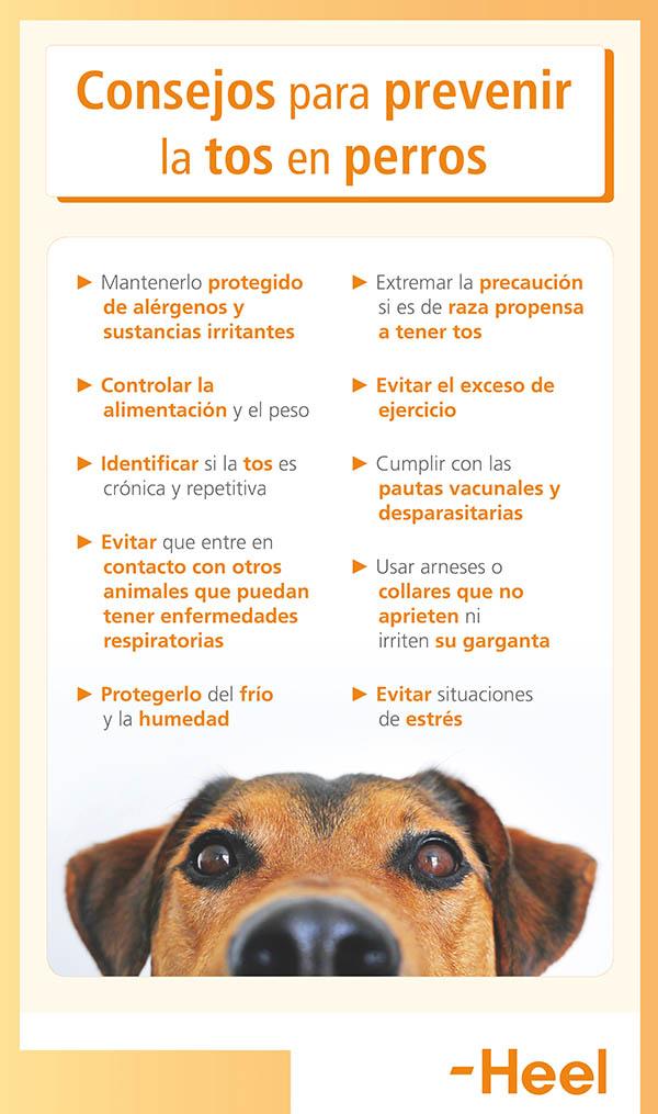 Prevenir la aparición de la tos de nuestros animales - HeelVet