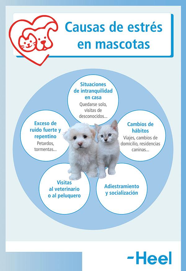 Navidades y situaciones de estrés en nuestra mascota - HeelVet