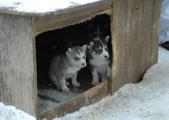 Tos de las perreras: síntomas - HeelVet