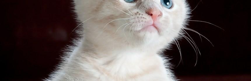accesorios collares gatos