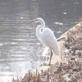 Bird Watching in Central Park: A Great Escape