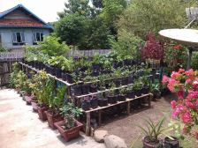 Lahan pekarangan dapat dioptimalkan sebagai penyedia pangan keluarga
